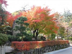 独楽園の紅葉