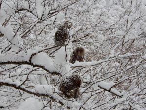 雪の中のサルたち