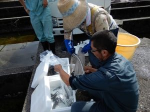 岩魚の袋詰め