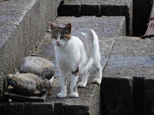 養魚場のネコ