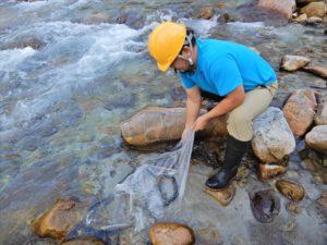岩魚の放流