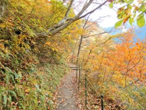 葉っぱが散り始めた山道