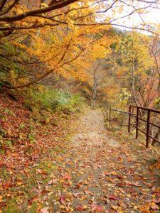 山道に落ちた葉っぱ