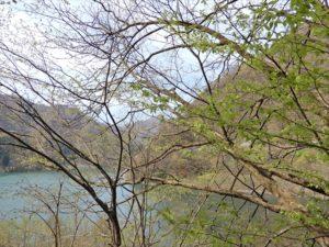 宇奈月ダム付近の新緑