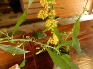 花にとまったカメムシ