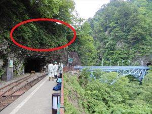 黒薙駅の「ササユリ」スポット