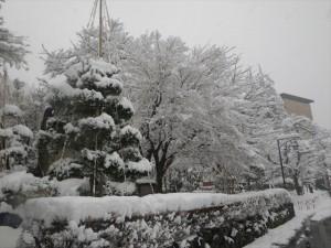 雪をまとった木々