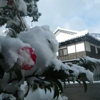 街路樹の椿