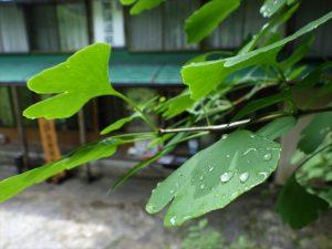 雨降りの黒薙温泉